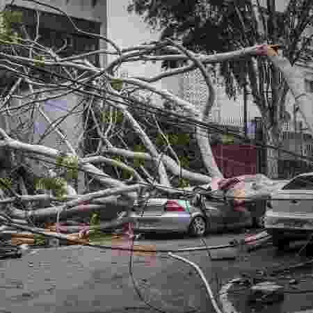 Árvore caiu sobre carro e matou uma mulher na Vila Mariana, zona sul de São Paulo - TABA BENEDICTO/ESTADÃO CONTEÚDO