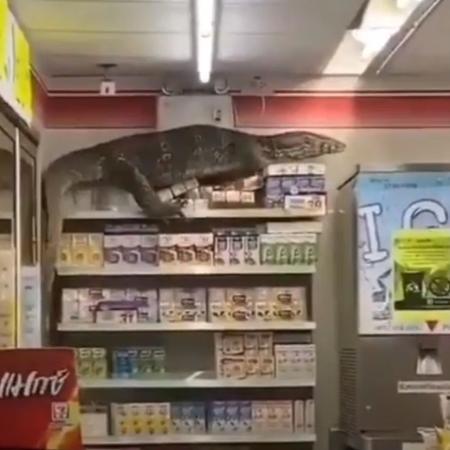 Lagarto sobe em prateleira de loja de conveniência na Tailândia  - Reprodução/Youtube/BTS - Behind The Story