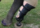 Próteses devolvem mobilidade a elefantes mutilados na Tailândia - Athit Perawongmetha