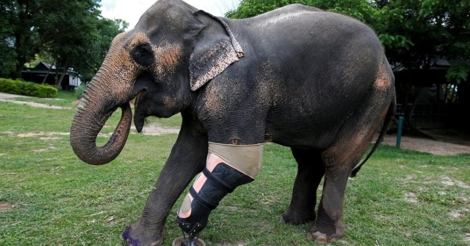 30.jun.2016 - O elefante chamado Motola testa uma prótese de pata para conseguir voltar a andar sem dificuldades na Fundação Asiática para Elefantes em Lampang, na Tailândia. O animal perdeu parte do corpo ao pisar em uma mina terrestre