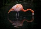 Como a bateria do seu celular pode matar os flamingos dos Andes - MartÌn Zabala/Xinhua