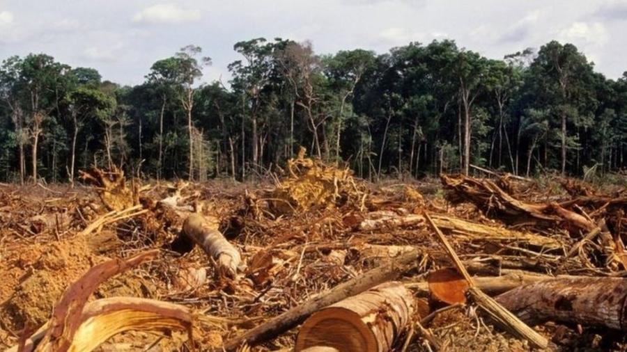 Desmatamento na Amazônia atingiu em 2020 o maior índice dos últimos 12 anos - GETTY IMAGES