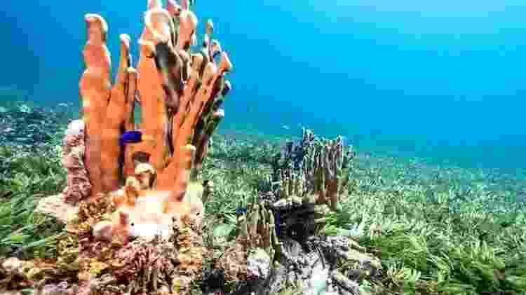 Os corais estão crescendo muito perto das ervas marinhas, diz Shaama - Greenpeace - Greenpeace
