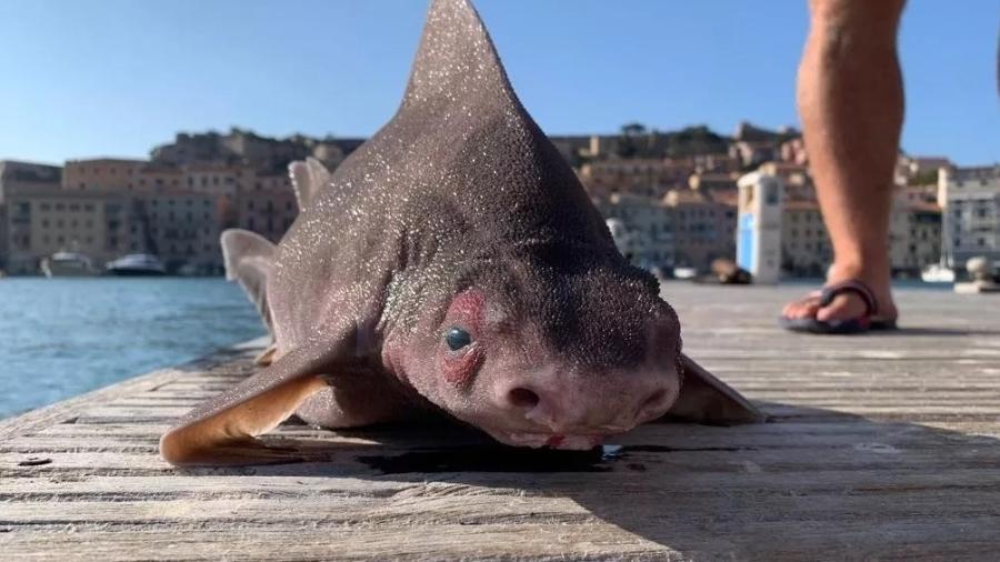 Animal foi encontrado por autoridades italianas no Mar Mediterrâneo - Reprodução/Isoladelbaapp.com