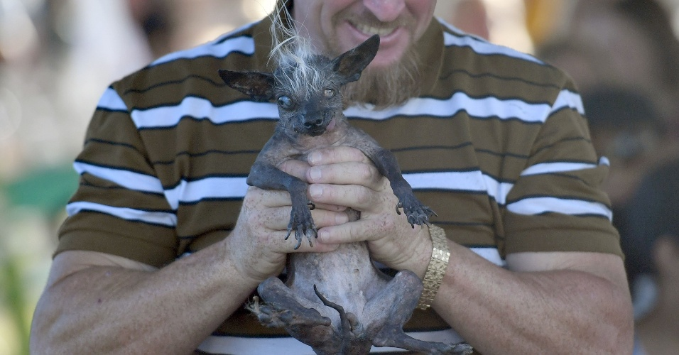 24.jun.2016 - Sweepee Rambo vence o concurso de cachorro mais feio do mundo no Sonoma-Marin Fair em Petaluma, California, EUA. O cãozinho cego de crista foi inscrito por seu dono, Jason Wurtz of Van Nuys