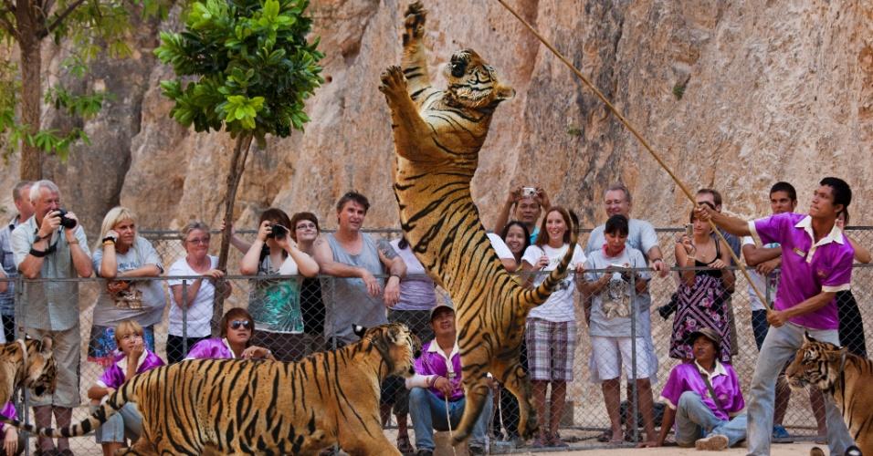 13.out.2015 - Um tigre tenta alcançar uma sacola de plástico amarrada a uma vara no enquanto turistas observam no controverso Templo dos Tigres, em Kanchanaburt, Tailândia. Os visitantes podem pagar para alimentar os filhotes com mamadeiras, andarem entre eles e posarem para fotos com animais acorrentados