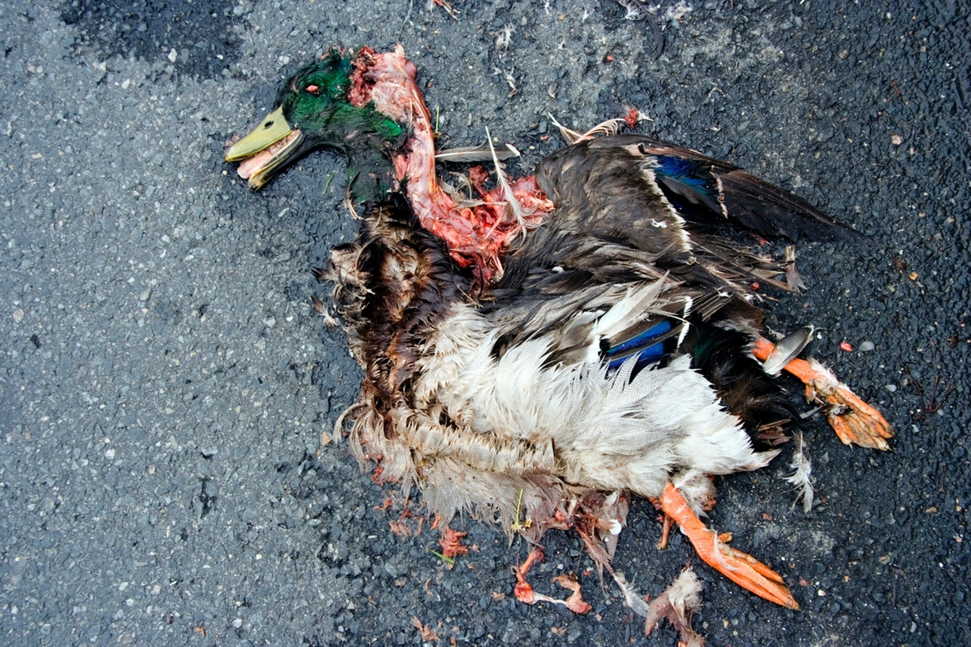 animal atropelado; estrado; trânsito; acidente; animais; atropelamento