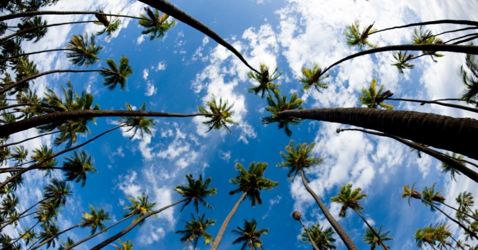 27.mai.2016 - A plantação de cocos de Kapuaiwa, no Havaí, é uma das mais antigas do país, iniciada nos anos 1860