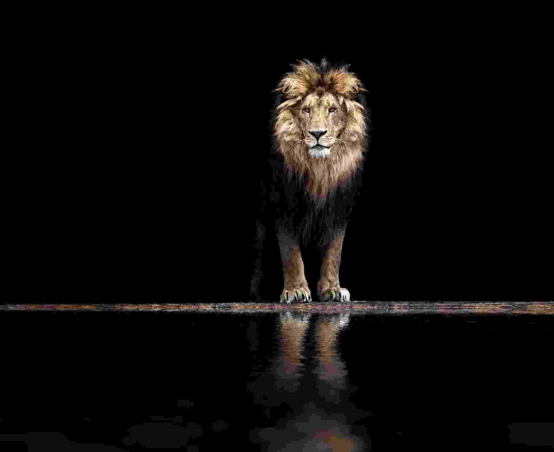 leão, imposto de renda, receita federal, impostos - Getty Images