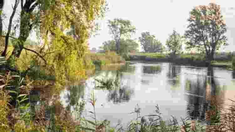 Ameba pode ser encontrada em lagos e zonas úmidas - Getty Images - Getty Images