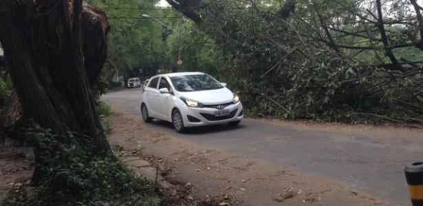 Na praça Pôr do Sol, árvore caída sem remoção atrapalha a passagem de carros na via