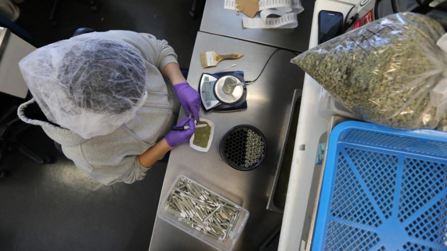 Funcionária pesa cannabis em dispensário para maconha medicinal - Jim Wilson/The New York Times
