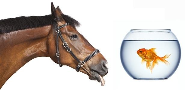 25.abr.2017 - Cavalo e peixe