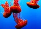 Da cremação às águas-vivas: 5 fontes alternativas de energia que você talvez não conheça - Jessica Lee/Eyeem