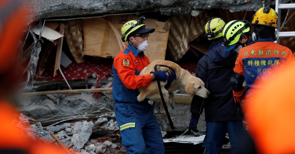 7.fev.2018 - Bombeiros salvam um cachorro de dentro de um hotel afetado pelo terremoto em Taiwan