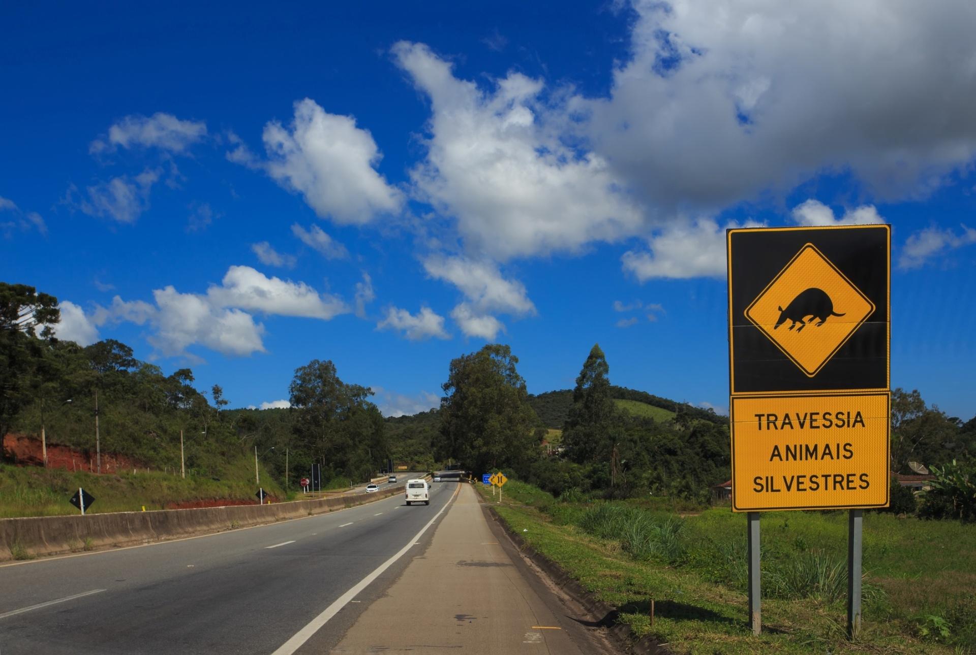 Animais atropelados; sinalização; trânsito; estrada