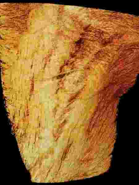 Imagem com detalhes de ventrículo de coração de camundongo feita a partir do Sirius  - Divulgação/CNPEM - Divulgação/CNPEM