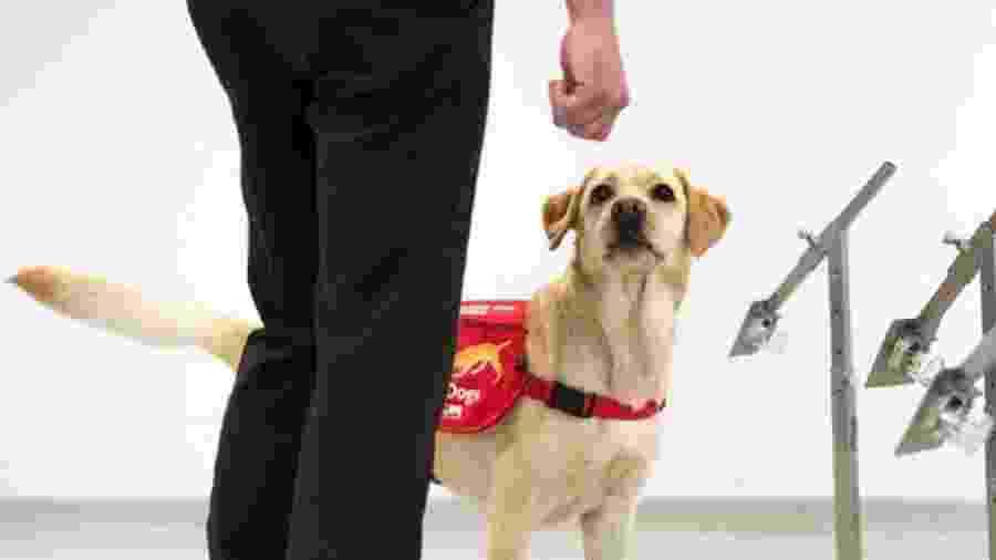 Cachorros sendo treinados para detectar covid-19 no Reino Unido - Divulgação/Medical Detection Dogs