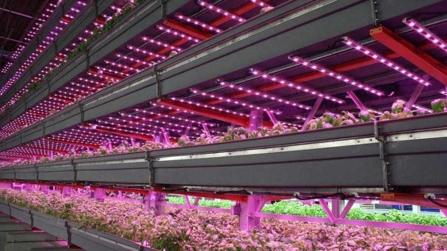 Produção de hortaliças em fazenda coberta usa tecnologia desenvolvida na Holanda - Reprodução/ growgroupifs.com