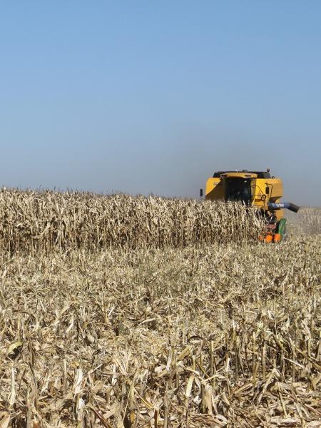 Colheita de milho: Paraná terá maior perda de sua história - Cocamar