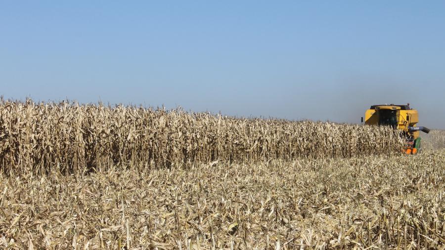Colheita de milho agronegócio safra - Cocamar