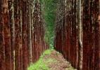 Florestas plantadas no Brasil alcançam área equivalente a de Pernambuco - Ernesto Rodrigues/Folhapress