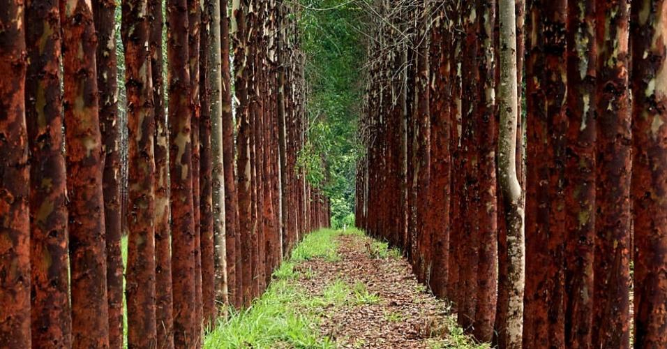 Florestas plantadas no Brasil alcançam área equivalente a de ...