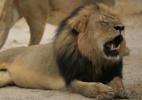 Parques Nacionais do Zimbábue/AFP