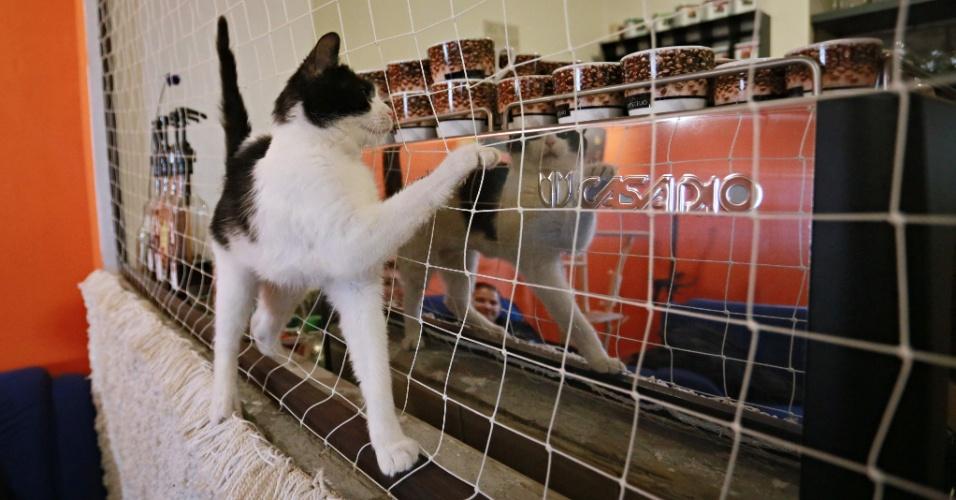 14.mar.2016 - Se o gato não está afim de papo, é preciso respeitá-lo. Nada de acordar o gatinho enquanto ele estiver dormido. Você gostaria que fizessem isso com você?