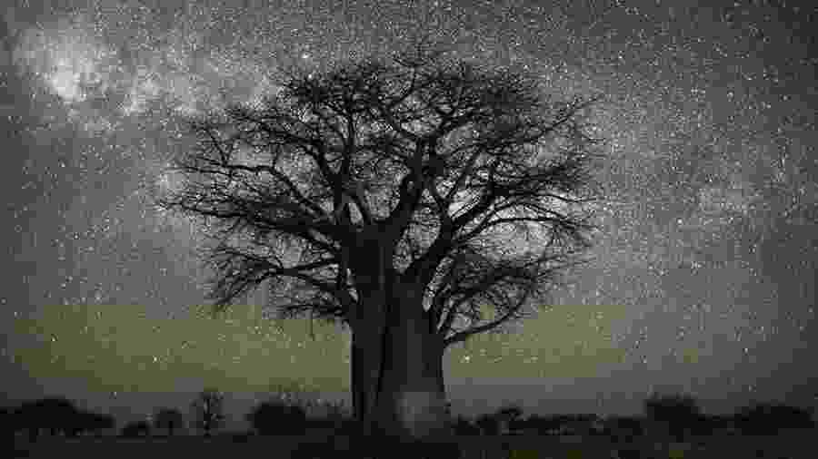 A fotógrafa Beth Moon se dedica há 20 anos a fotografar árvores antigas em seu projeto Portraits of Time - Beth Moon