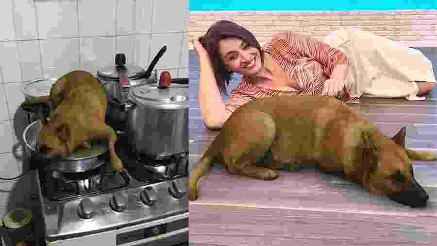 Sasha Dog, o cachorro caramelo preferido do Brasil - Reprodução