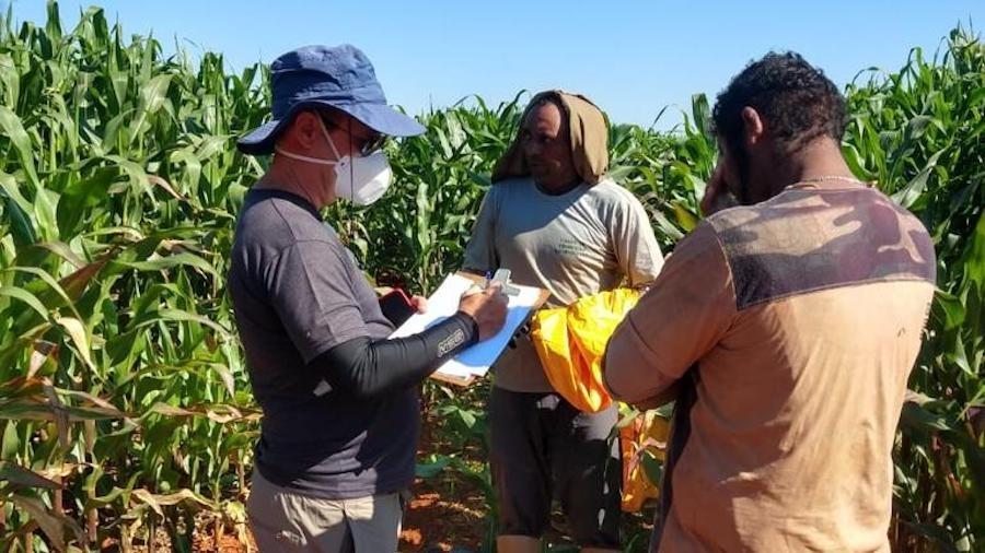 Trabalhador é resgatado em fazenda de milho em Paracatu (MG) - Fiscalização/Divulgação