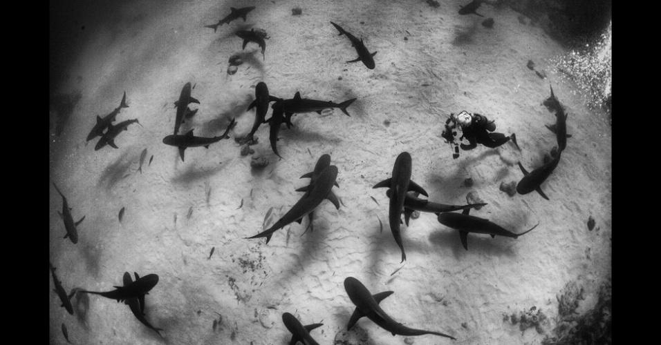 5.fev.2016 - Bin Thalith fez o registro deste grupo de tubarões de recife caribenhos nos arredores da Grande Bahama, maior ilha das Bahamas