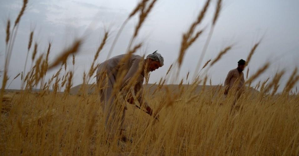 31.jul.2016 - Agricultores afegãos colhem trigo nos arredores de Mazar-i-Sharif, no Afeganistão