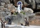 Pinguim famoso por se apaixonar por imagem de papelão morre no Japão - Zoo Tobu/AFP