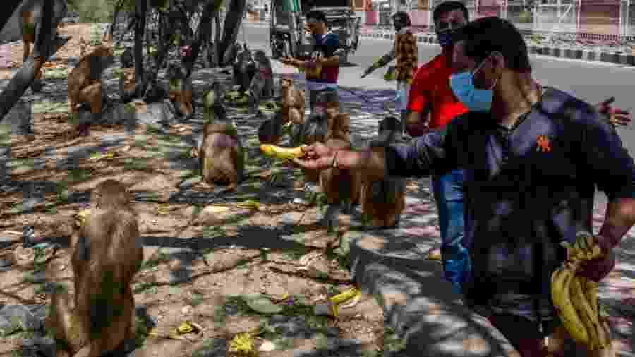 8.abr.2020 - Macacos são alimentados em Nova Déli, onde os animais estão se sentindo mais à vontade para ocupar as ruas - Yawar Nazir/Getty Images