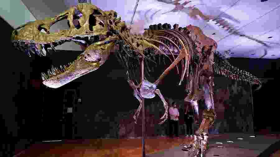 Fóssil de T-Rex será leiloado - Angela Weiss / AFP