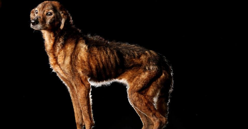 """PICHURRA - Pichurra é idosa e está no abrigo Famproa, em Los Teques (Venezuela), há muitos anos. """"Ela é extremamente calma, nunca briga, nunca late. Na verdade, os voluntários têm de prestar bastante atenção nas refeições porque se os outros cachorros roubarem a comida dela, ela não reclama"""", disse Maria Silva"""