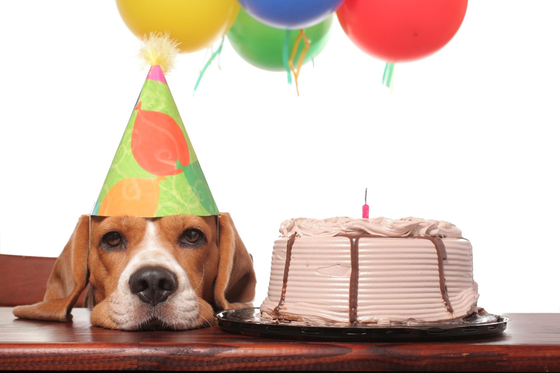 8.nov.2016 - Cachorro faz aniversário