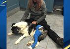 Cachorra que salvou família de incêndio precisa de ajuda após ato heroico - Reprodução de vídeo