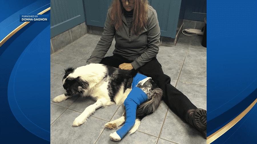 Precious se recupera em um hospital veterinário  - Reprodução de vídeo