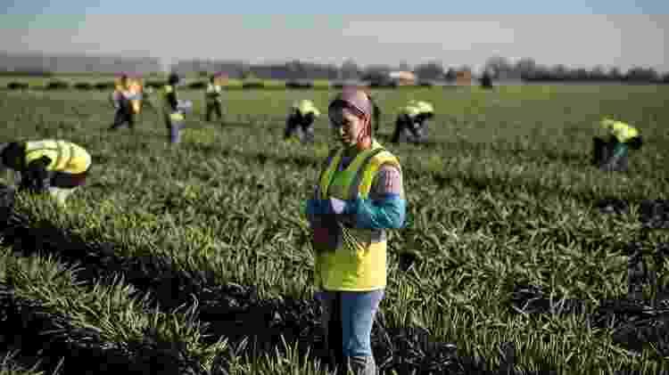 Setores como agrícola podem ser duramente afetados por Brexit - Getty Images - Getty Images
