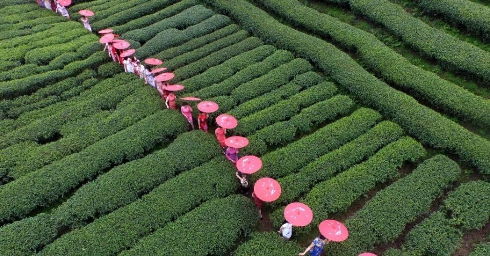 """26.mar.2016 - Com guarda-chuvas e roupa tradicional, modelos caminham em um jardim de chá em Guangxi Zhuang, no sul da China, e formam um mosaico de exibição cheongsam (vestido tradicional feminino na cultura chinesa, também conhecido como """"qipao"""")"""