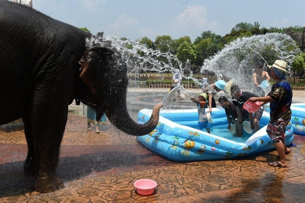 27.jul.2016 - Elefante brinca de guerra d'água com turistas em dia quente do verão em Hangzhou, na China
