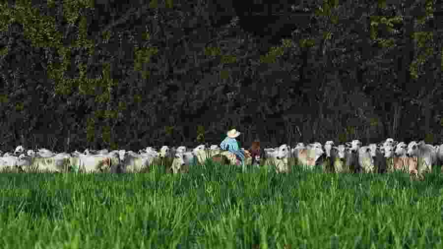 Vaqueiro lida com gado em pasto no Pará  - Lalo de Almeida/Folhapress
