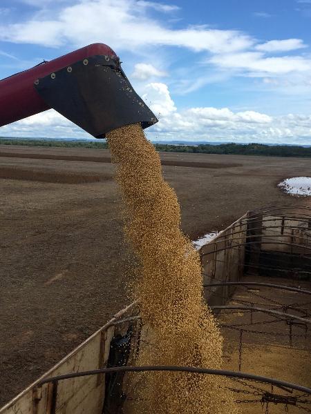 Entre as commodities, os grãos devem se beneficiar com o aumento nos preços - Roberto Samora