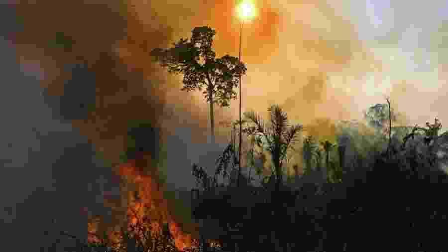 Foto tirada em 15 de agosto de 2020 mostra queimada ilegal na Amazônia, em Novo Progresso (PA) - Carl de Souza/AFP