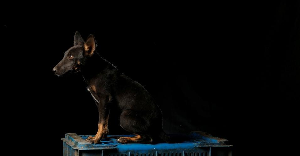 """REUTERS - Ela recebeu esse nome porque chegou quando o fotógrafo da Reuters estava fazendo a série de fotos no abrigo. """"É uma filhotona, super feliz, com muita energia e quer brincar com os outros o tempo todo"""", diz Maria Silva, que cuida dos cachorros no abrigo Famproa, em Los Teques, na Venezuela"""