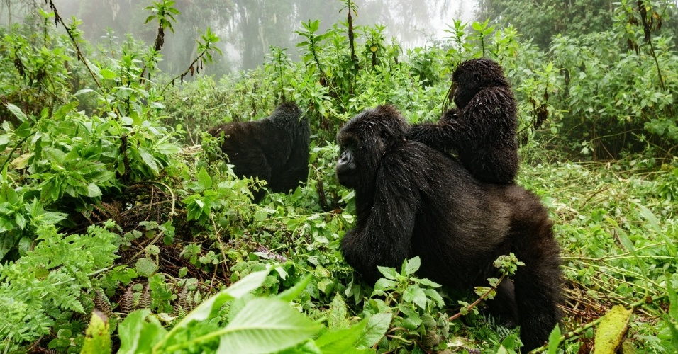 Parque Virunga, na República Democrática do Congo