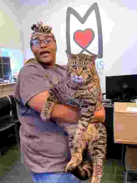 Mr. B, o gato de 12 quilos que foi adotado nos EUA após bombar na web - Divulgação/Morris Animal Refuge